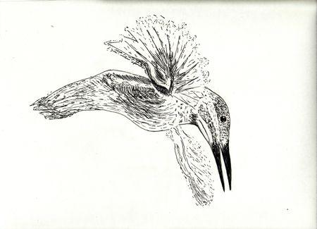 tkingfisher_0001